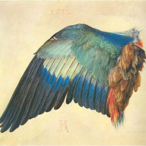 Albrecht-Duerer_wing_of_a_blue_roller