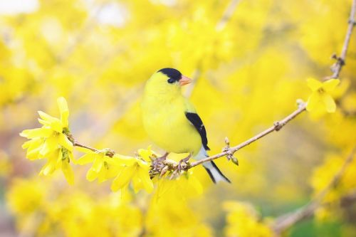 spring-bird-2295435_1280
