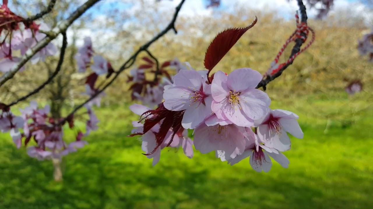 Spring during corona